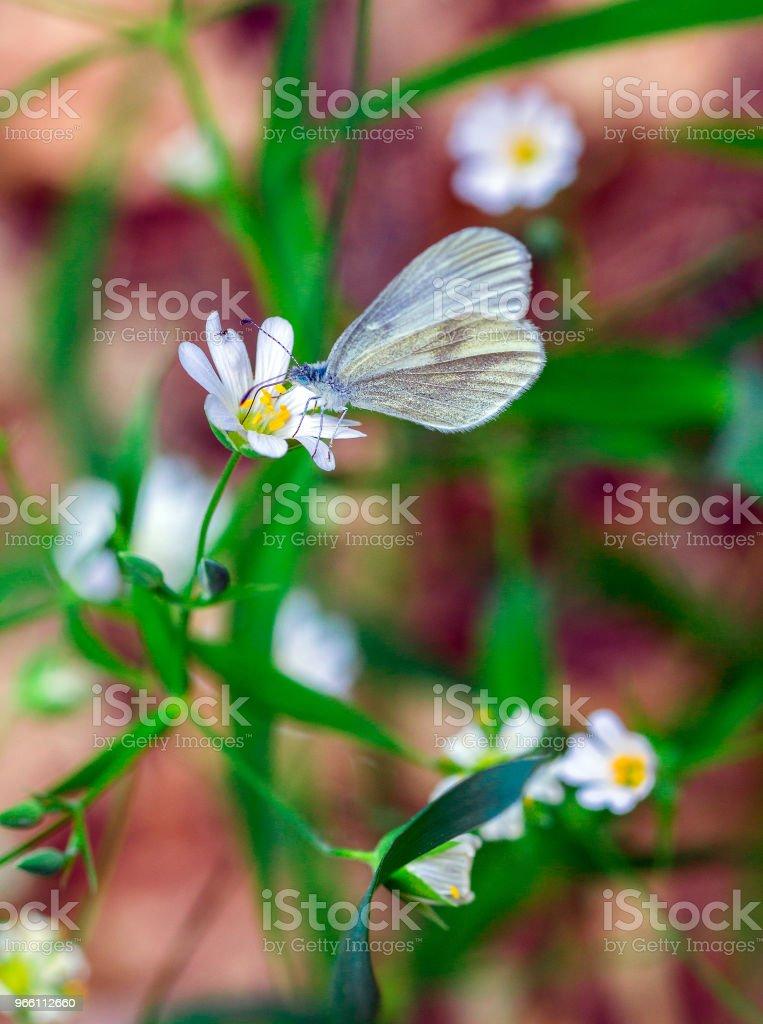 Witte bloemen muur - Royalty-free April Stockfoto