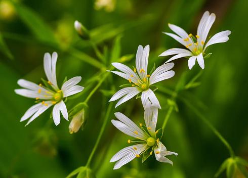Witte Bloemen Muur Stockfoto en meer beelden van April