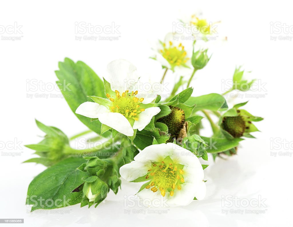 white flowers strawberries royalty-free stock photo