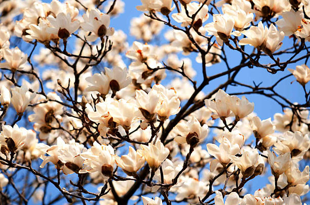 White Flowers Under Clear Blue Sky