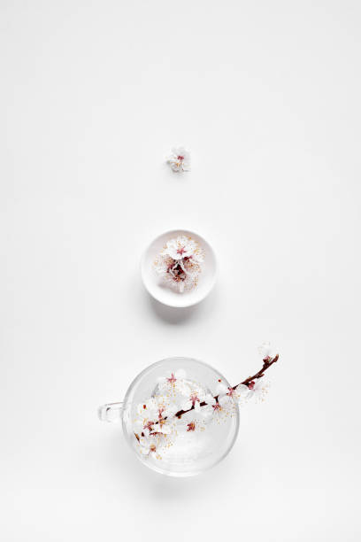 White flowers zen minimalistic on white stock photo