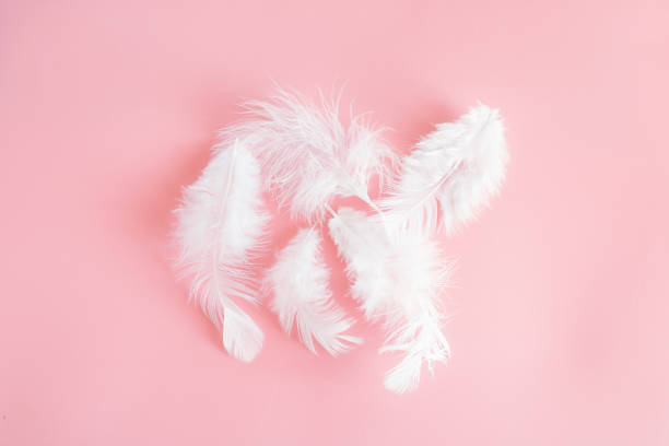 white fluffy feathers lying on a delicate pink background. small fluffy white feathers are located in the center. - pena de pássaro algodão imagens e fotografias de stock