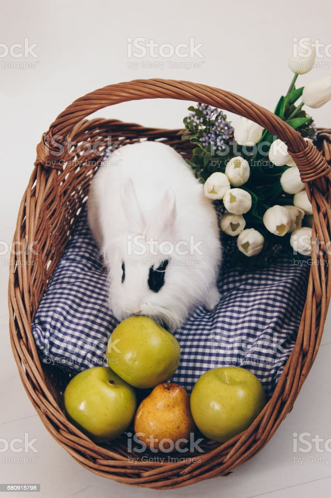 White fluffy rabbit in basket with flowers and apples royalty-free stock photo