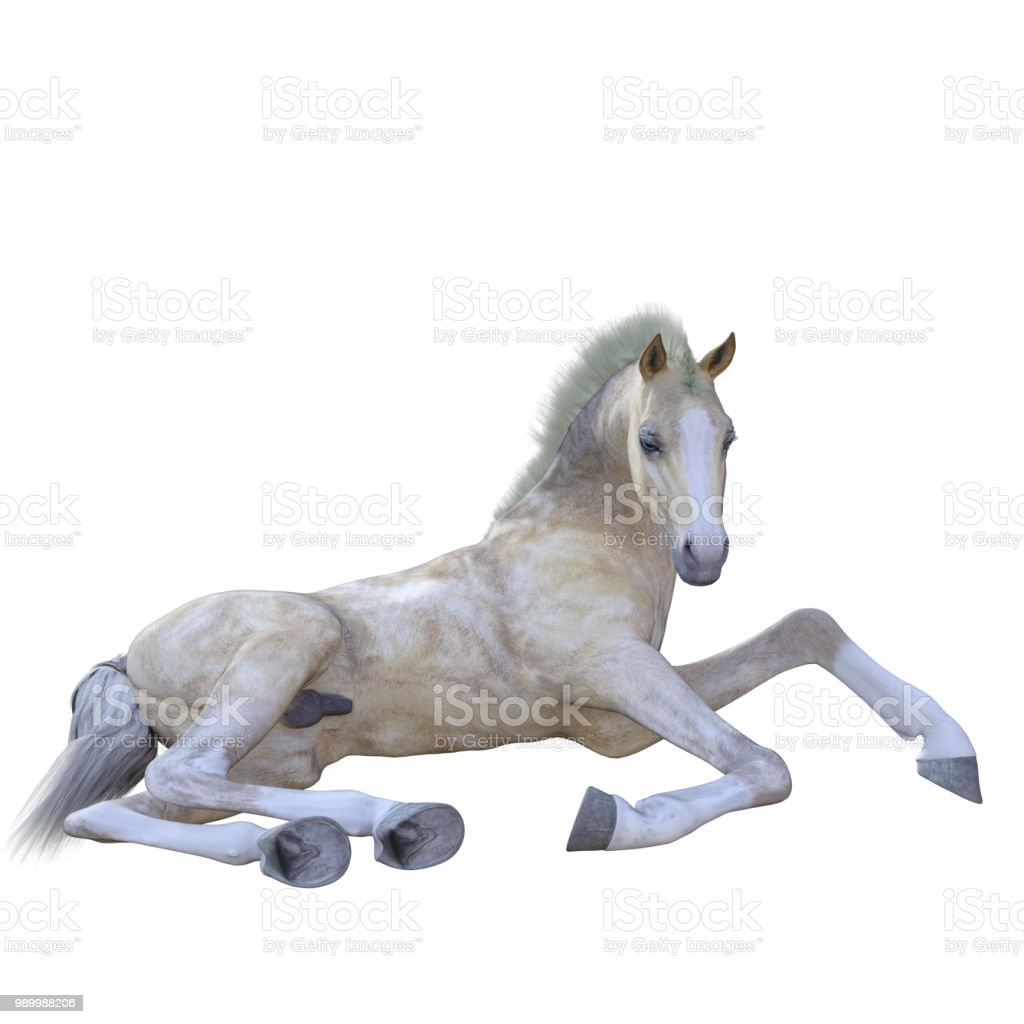 White Foal Baby Horse Isolated On White 3d Render Stock Photo Download Image Now Istock