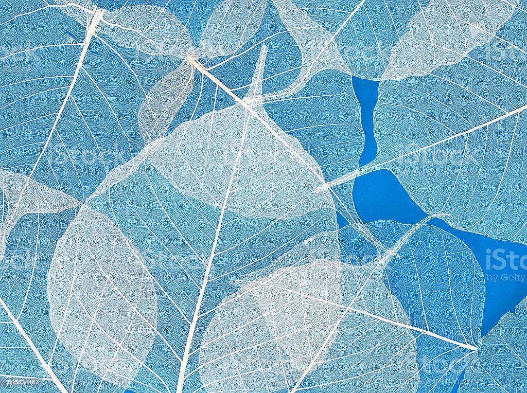 white foliage stock photo
