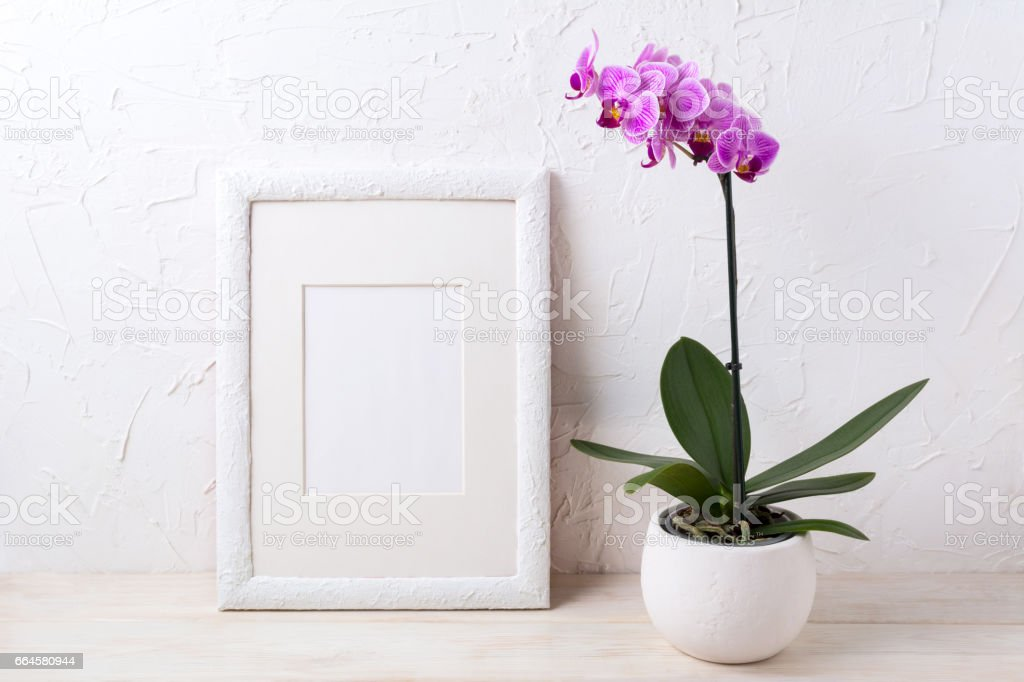 White frame mockup with purple orchid in flower pot stock photo