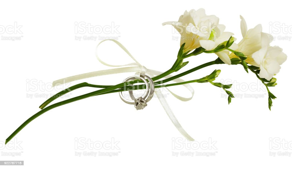 White freesia flowers and two golden rings tied with silk ribbon bow white freesia flowers and two golden rings tied with silk ribbon bow royalty free stock mightylinksfo