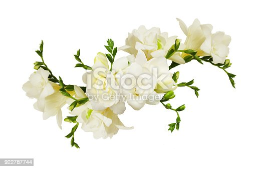White freesia flowers in a beautiful arrangment isolated on white background