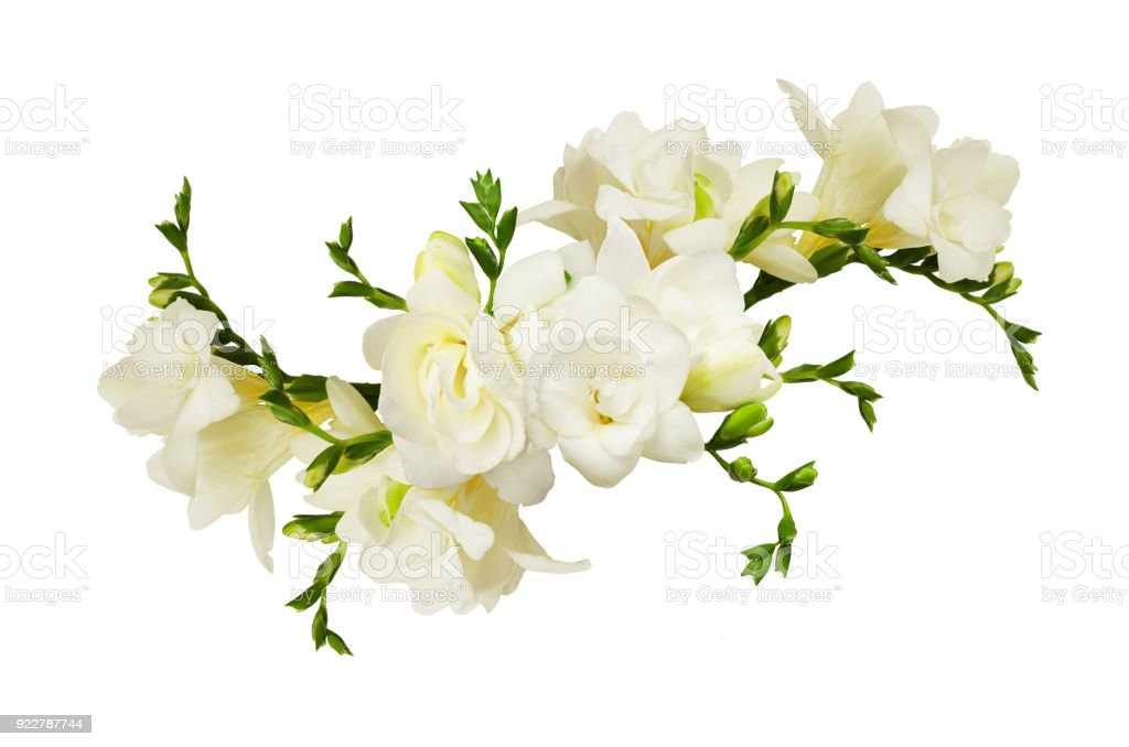 White freesia flowers in a beautiful arrangment стоковое фото