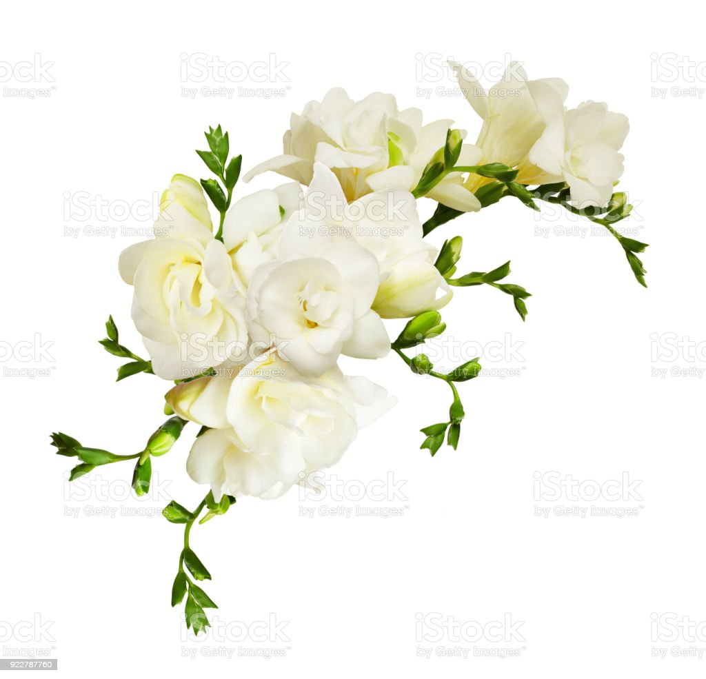 White Freesia Flowers In A Beautiful Composition Stock Photo More