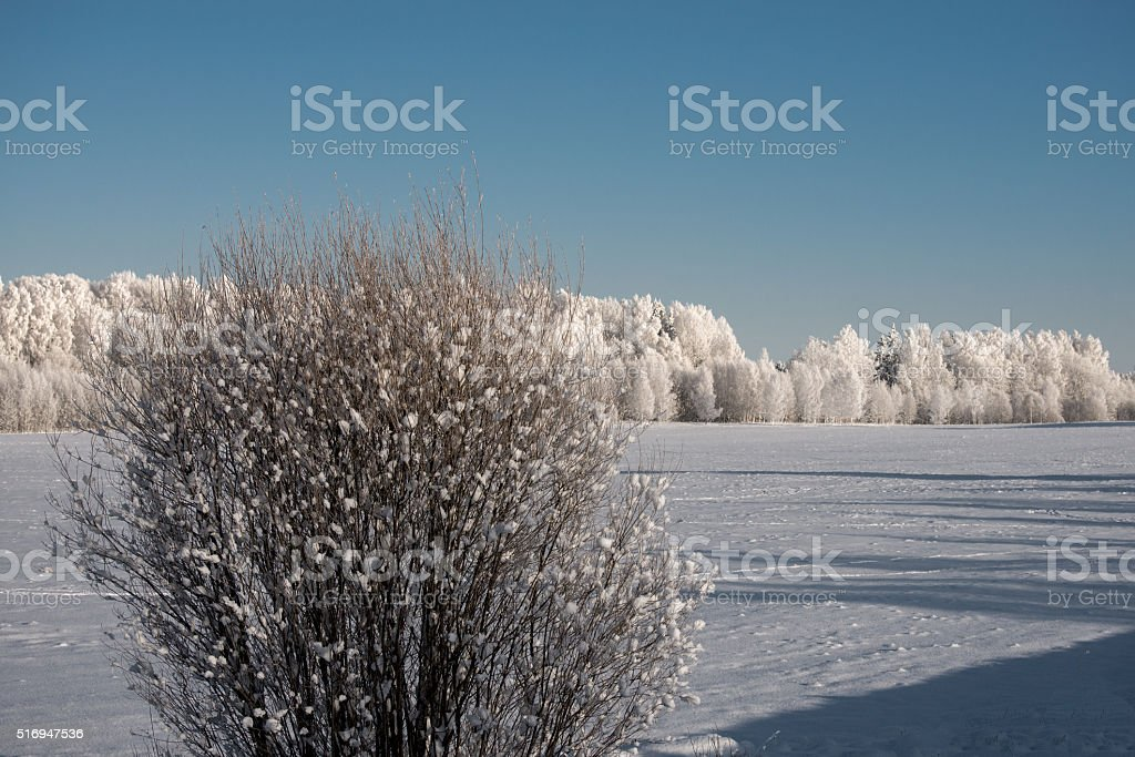 White Frost Covered Trees stock photo
