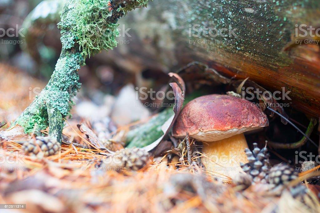 White fungus has grown under a log stock photo