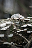 White fungus growing all over a fallen tree branch