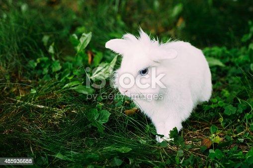 istock White Funny Bunny Rabbit On Green Grass 485936688