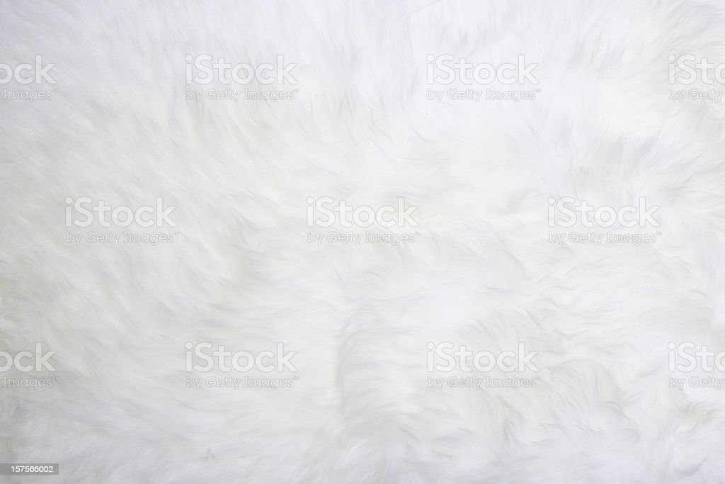 white fur stock photo