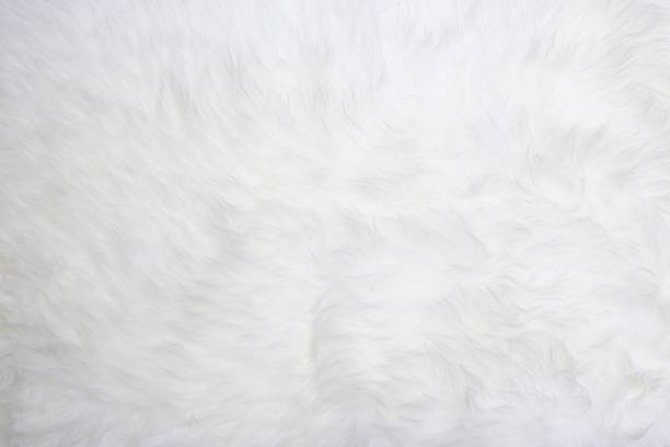 white fur White fur useful for backgrounds or textures, good resolution animal hair stock pictures, royalty-free photos & images