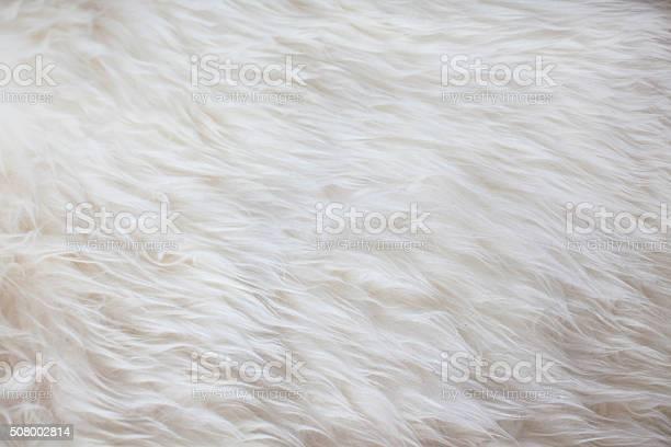 White fur texture background picture id508002814?b=1&k=6&m=508002814&s=612x612&h=aksyffg6ee2cedrdg70judsug0tdnayessccog8nhpw=