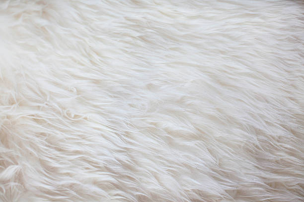 white fur texture background - 皮草 個照片及圖片檔