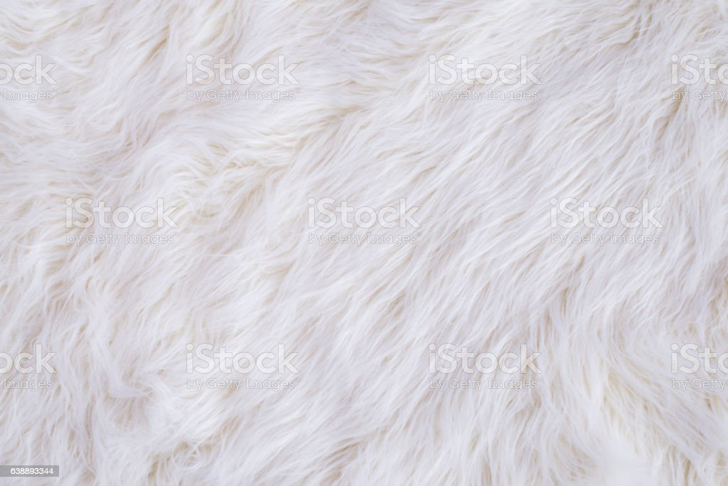 White Fur Texture