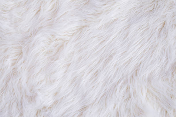 White Fur Texture White Fur Texture Background animal hair stock pictures, royalty-free photos & images