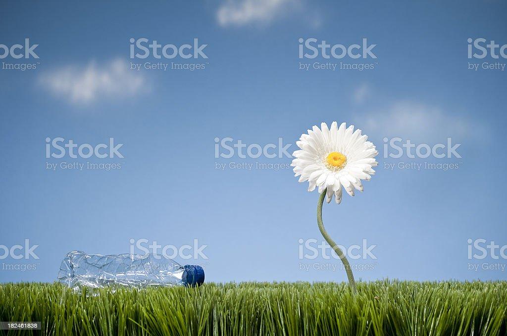 White Gerbera Daisy And Trash royalty-free stock photo