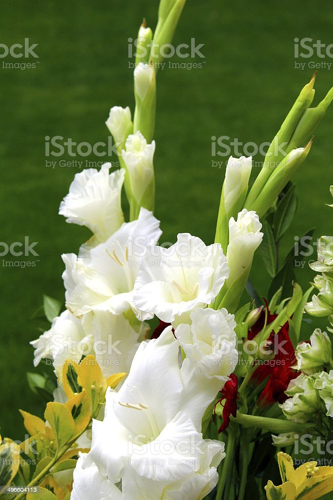 White gladiolus in a flower bouquet royalty-free stock photo