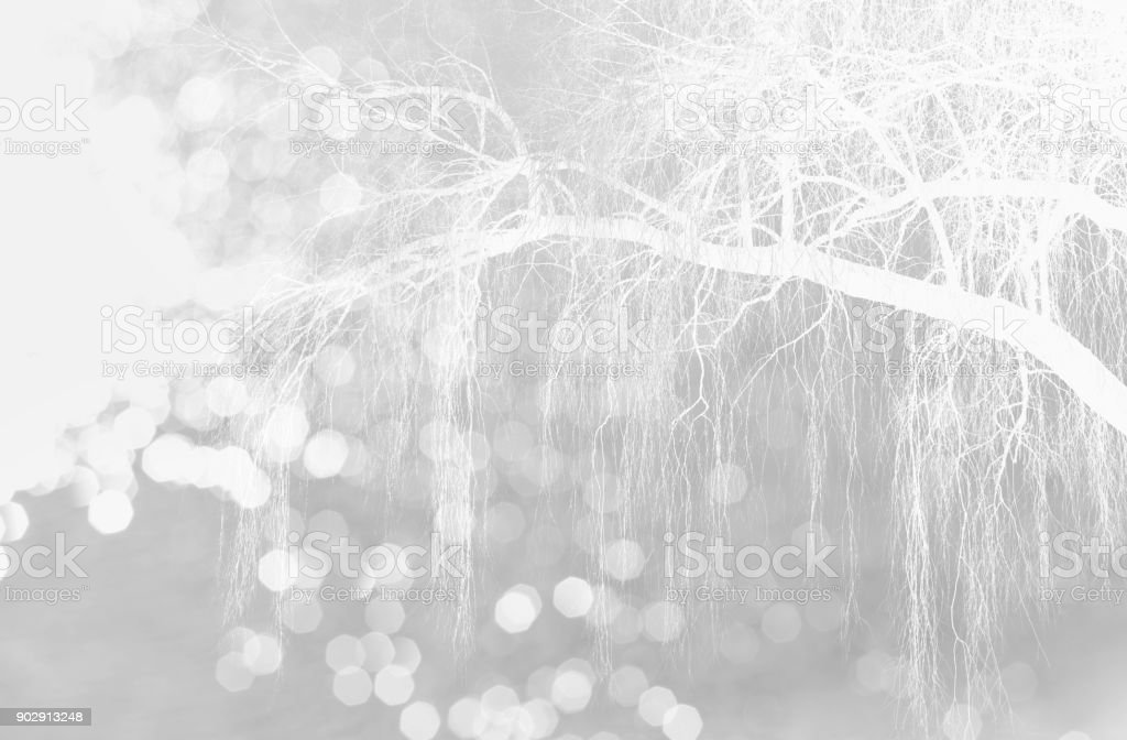 white glitter bokeh light with nature snow tree branch winter Christmas grey background stock photo