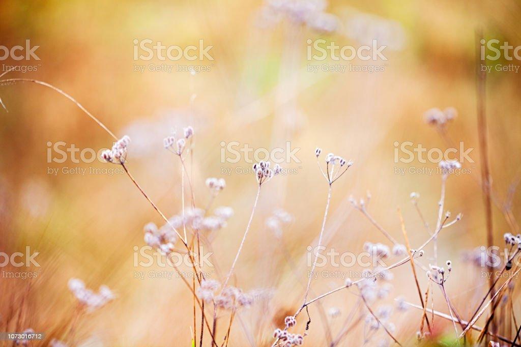 Weiß-goldenen Pflanzen – Foto