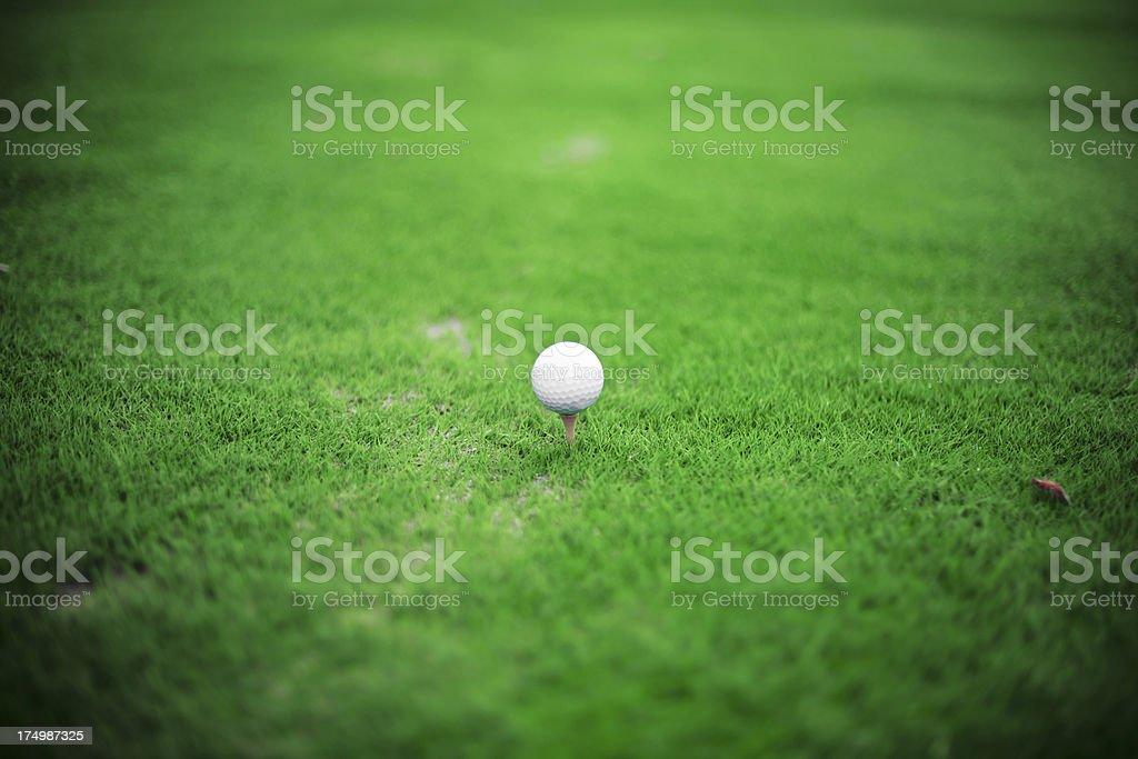 White golf ball on tee stock photo