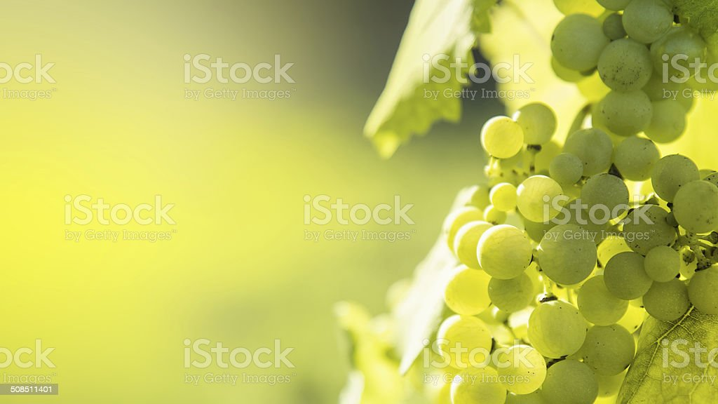 White grapes background stock photo