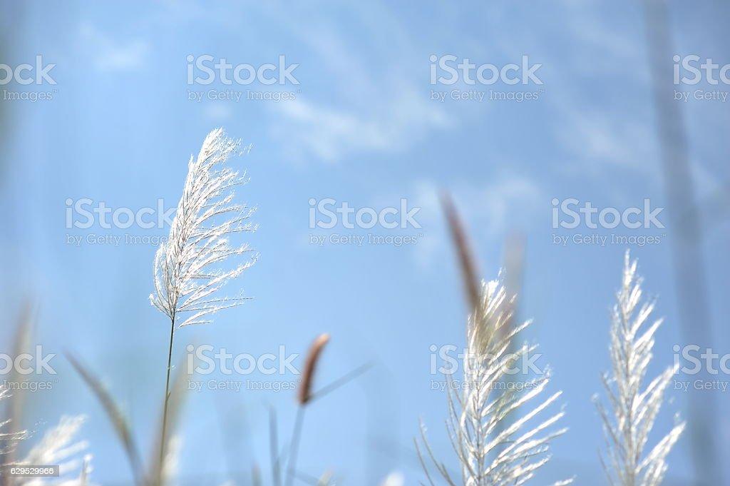 white grass flower of green farm field in winter season stock photo