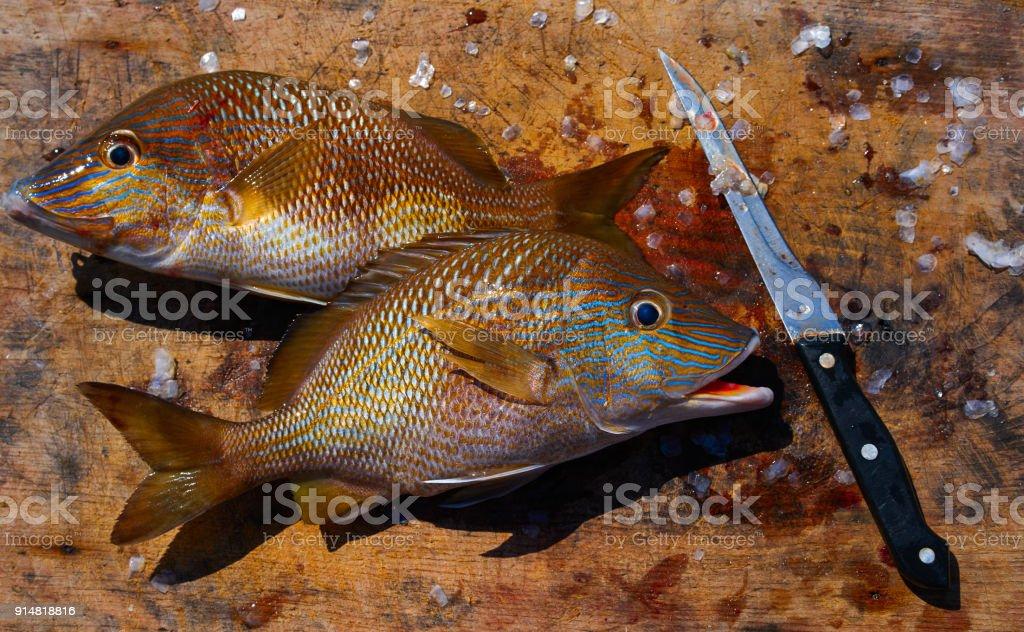 white grunt fish Haemulon plumieri stock photo