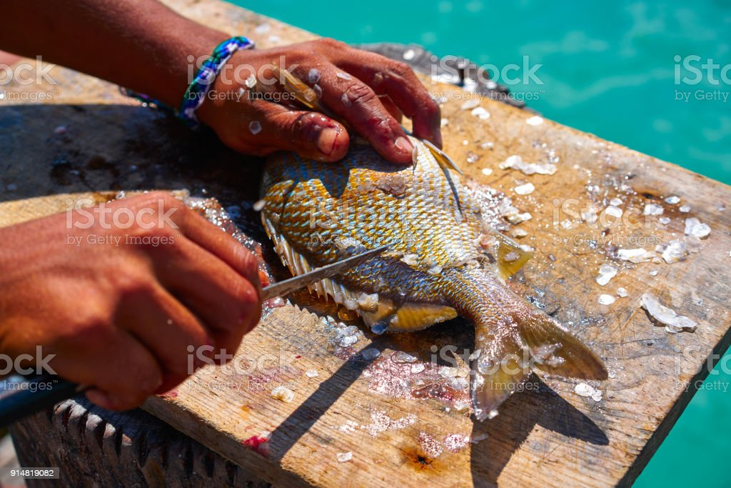 white grunt fish unwind in Caribbean stock photo