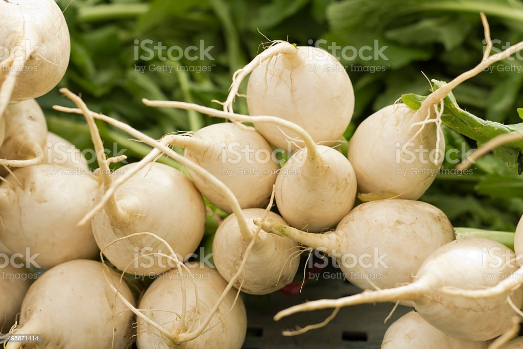 White Hailstone Radish stock photo