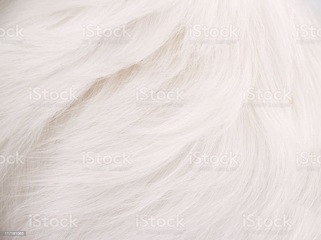 White Hair Background stock photo