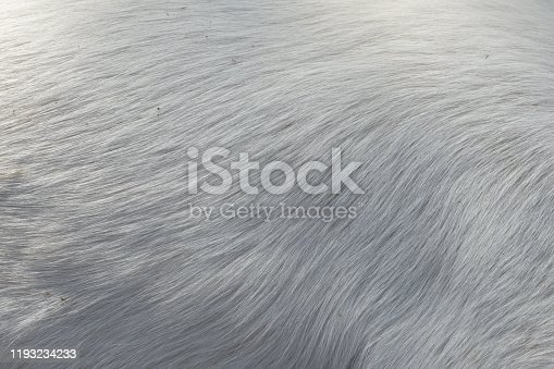 Soft hair texture of the dog skin
