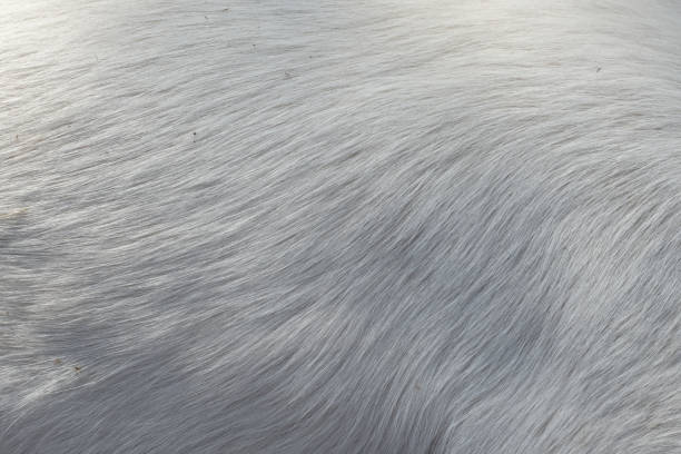 White hair of the dog Soft hair texture of the dog skin animal hair stock pictures, royalty-free photos & images