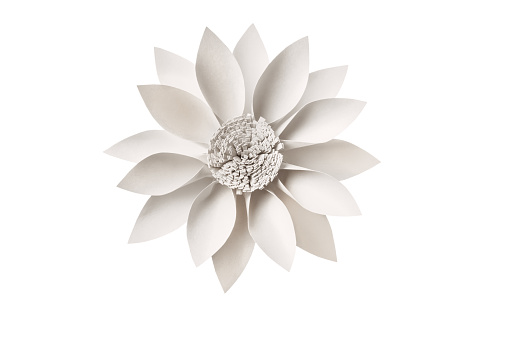 Isolated white paper flower on white background.
