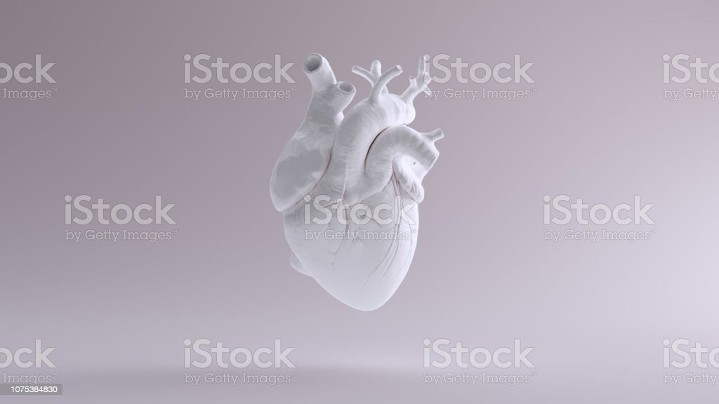 White Heart Anatomical stock photo