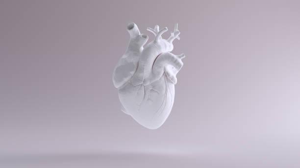白心解剖 - 人體部分 個照片及圖片檔