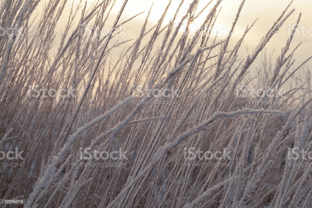White herb royalty-free stock photo