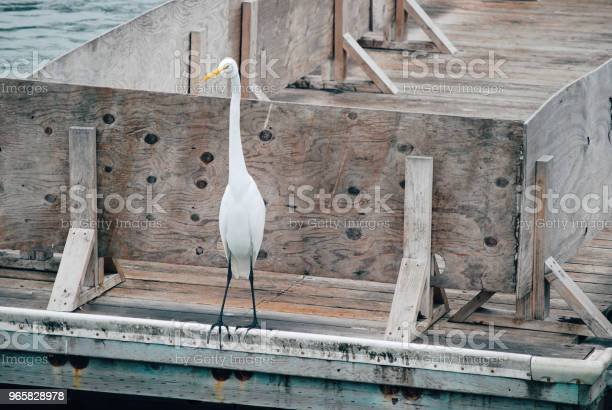 White Heron Standing In The Bay Stock Photo - Download Image Now
