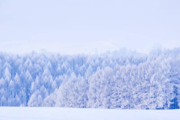 ホワイトの丘 - 北海道 ストックフォトと画像