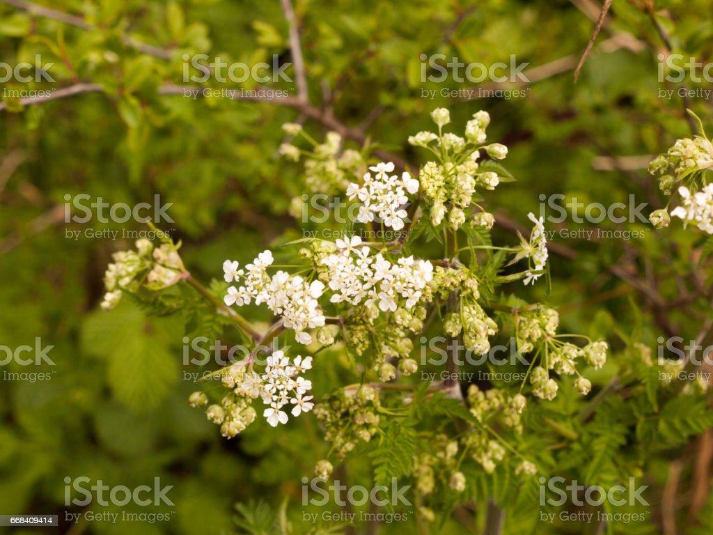 Berenklauw in het voorjaar witte warmte en licht op zoek vreedzame tijd foto