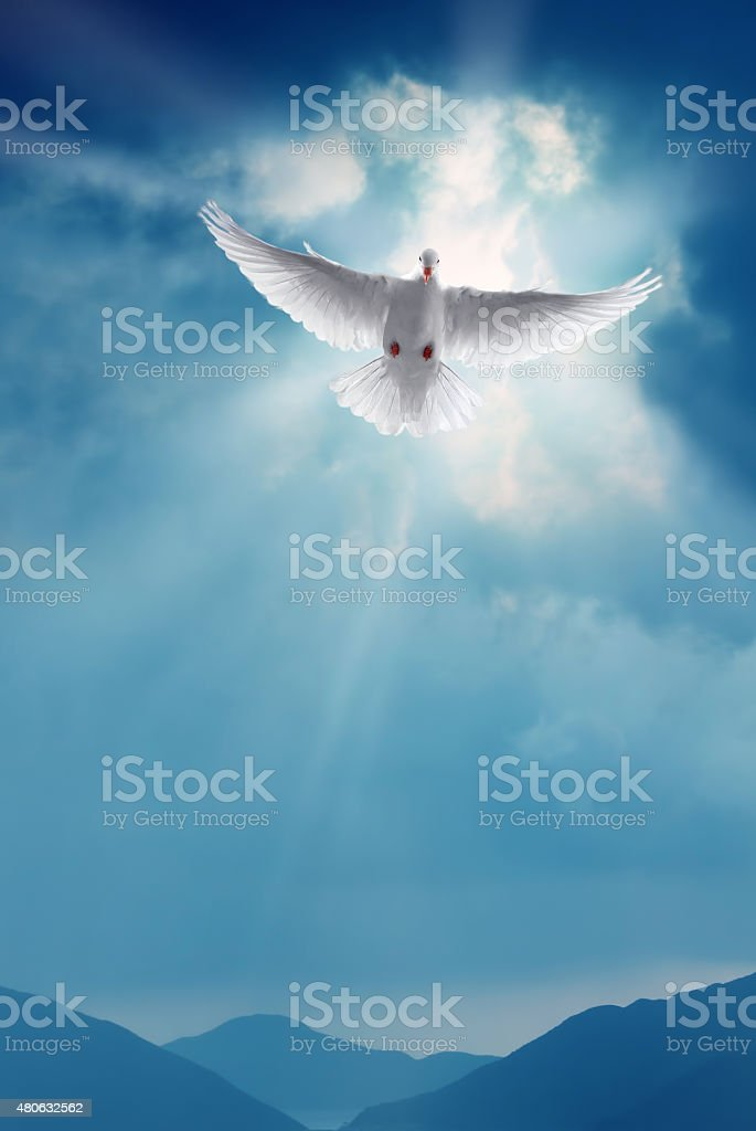 White Holy Dove Flying in Blue Sky Vertical Image stock photo