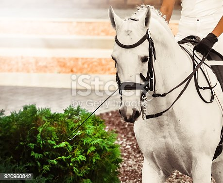 istock White horse, advanced dressage test on equestrian competition. 920960842