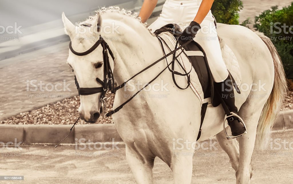 White Horse Advanced Dressage Test On Equestrian Competition Stock Photo Download Image Now Istock