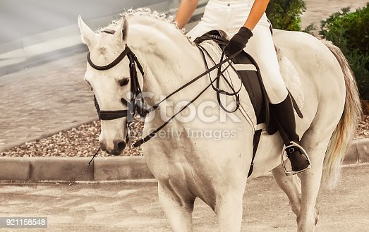 istock White horse, advanced dressage test on equestrian competition. 921158548