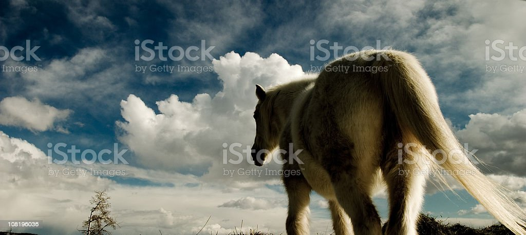 White Horse Against Cloudy Sky royalty-free stock photo
