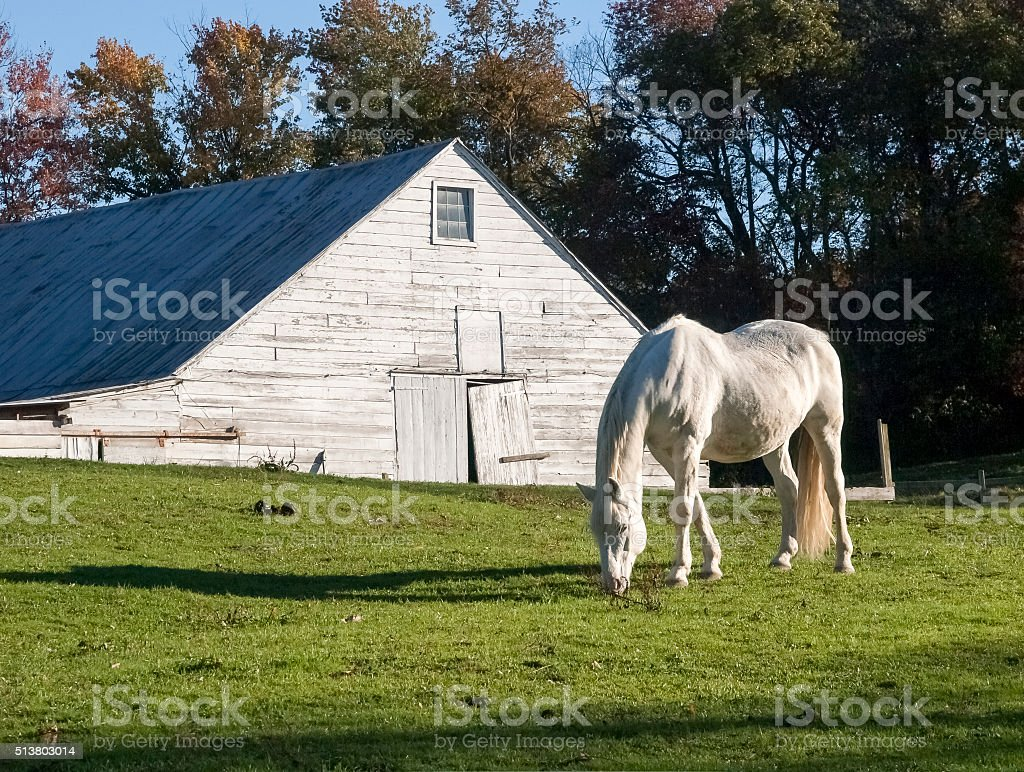 White Horse and Dutch Barn stock photo